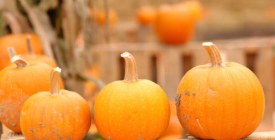 pumpkin blog